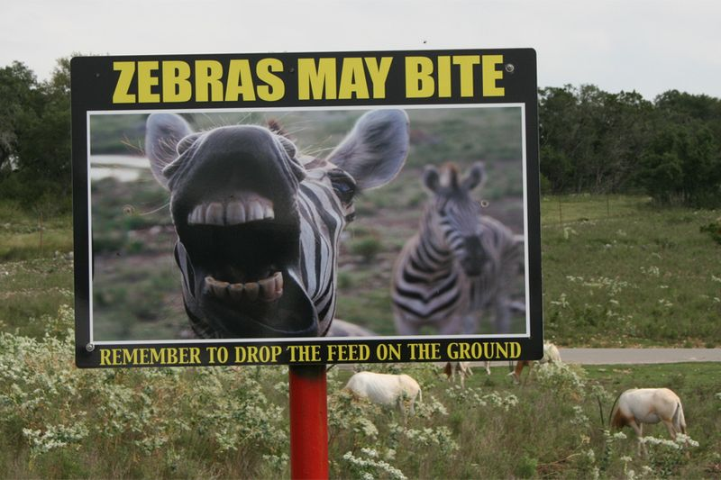 Zebras may bite